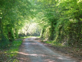 The farm lane - North Devon